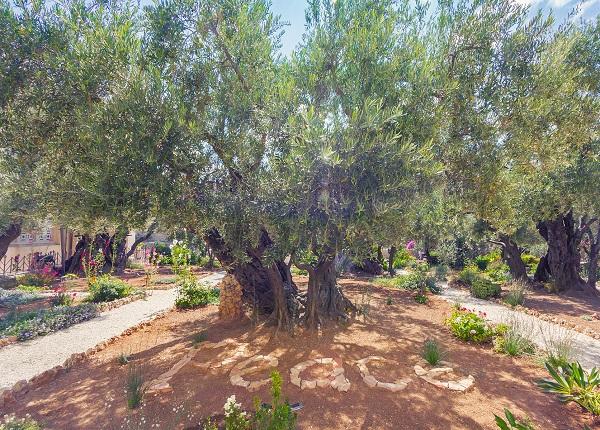Православный Иерусалим и Вифлеем 1 день. Гефсиманский Сад