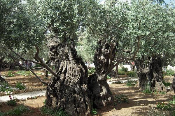 Православный Иерусалим и Вифлеем - 4 дня 3