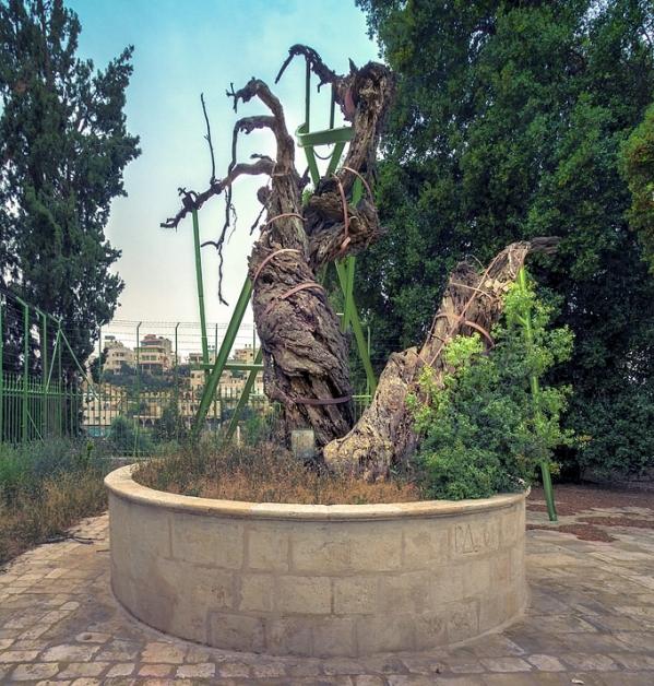 Вифлеем и библейский Хеврон. Мамврийский Дуб