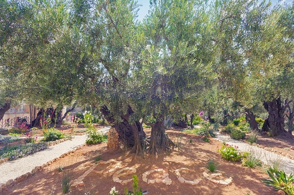 Гефсиманский Сад. Православный Иерусалим и Вифлеем 1 день
