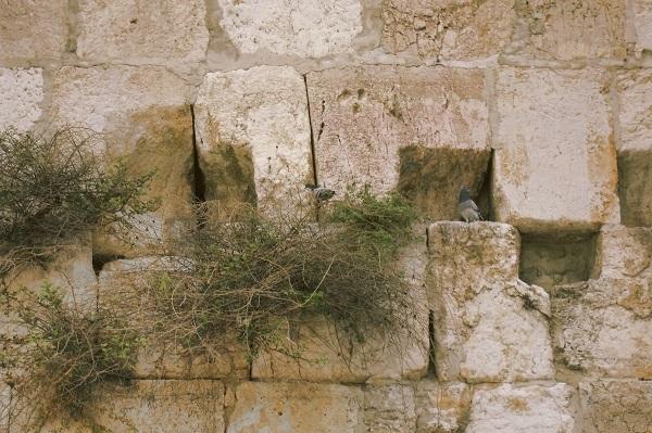 Стена Плача. Стены Старого Города